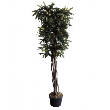 Mimosa Amarilla 150 cm