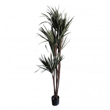 Planta Cinta 170 cm