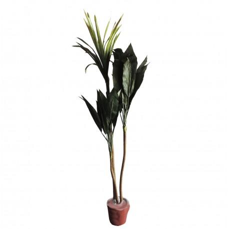 Planta 160 cm