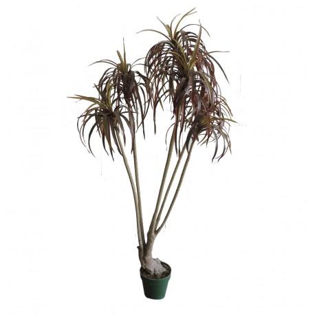 Planta 5 Varas 140 cm