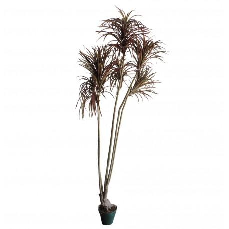 Planta 6 Varas 180 cm