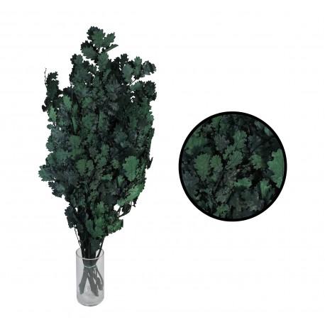 Quercus Verde Rama Pres.