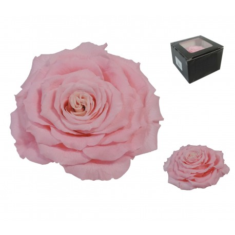 Rosa Extra Grande Rosa Preservada