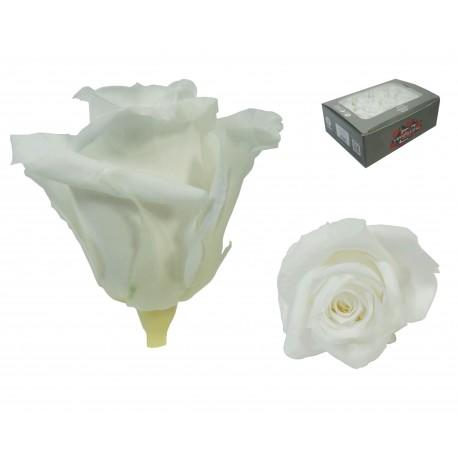 Rosa Blanca Mini 12 uds Preservada