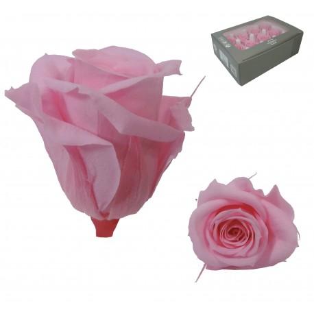 Rosa Rosa Mini 12 uds Preservada
