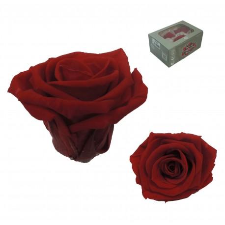 Rosa Roja Mediana 8 uds Preservada
