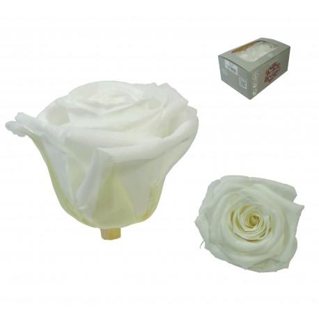 Rosa Blanca Mediana 8 uds Preservada