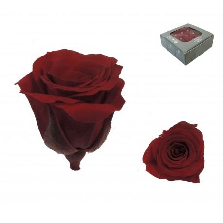 Rosa Rojo ExtraMini 16 uds Preservada