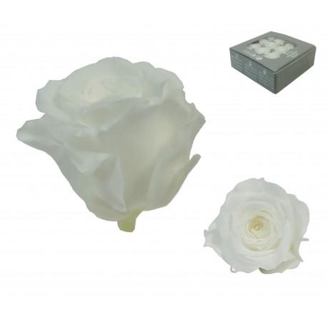 Rosa Blanca ExtraMini 16 uds Preservada