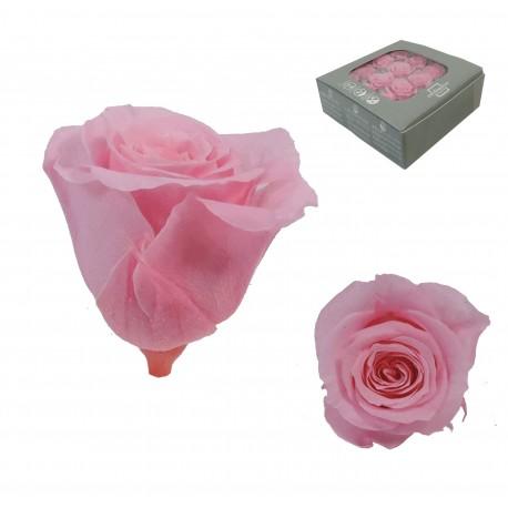 Rosa Rosa ExtraMini 16 uds Preservada