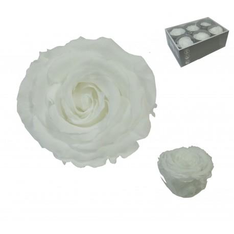 Rosa Blanca ExtraGrande 6 uds Preservada