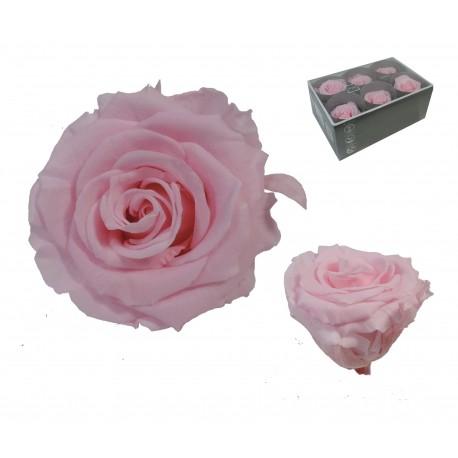 Rosa Rosa ExtraGrande 6 uds Preservada