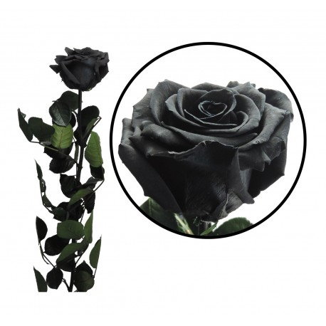 Rosa 55 cm Negra Preservada