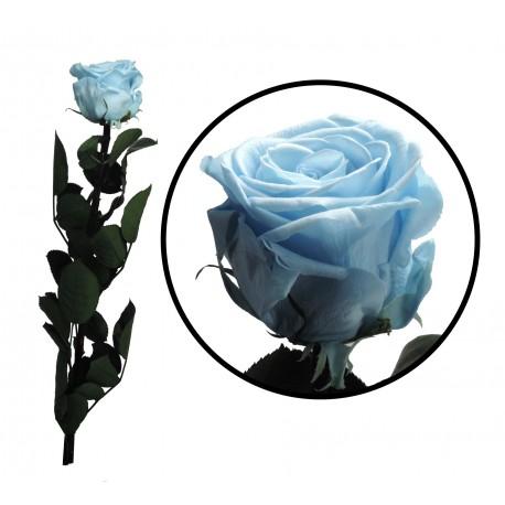 Rosa 55 cm Celeste Preservada