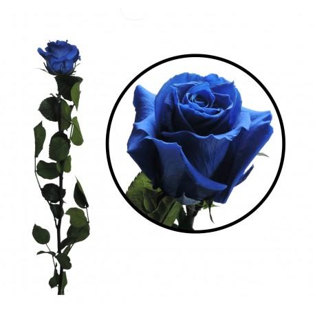 Rosa 55 cm Azul Preservada