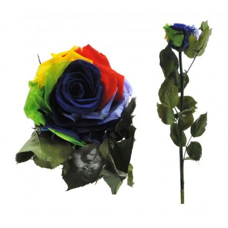 Rosa 55 cm Multicolor Preservada
