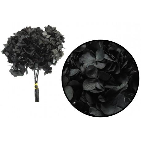Hortensia Negra Preservada