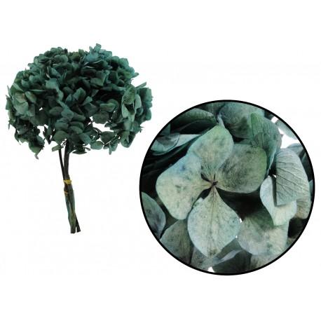 Hortensia Verde Mar Preservada