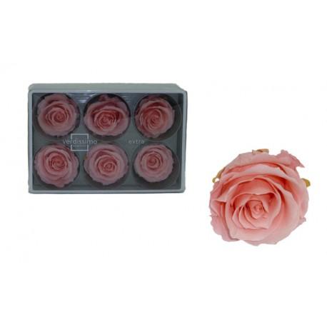 Rosa Rosa vintage ExtraGrande 6 uds Preservada