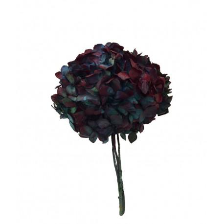 Hortensia Bicolor Azul/Borgoña Preservada