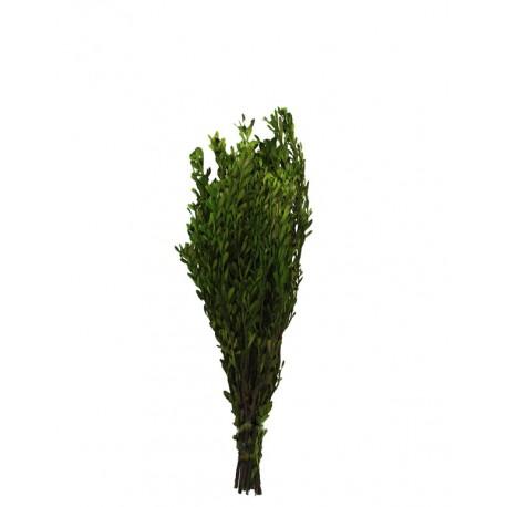 Pubescens ↨45xØ12cm Verde