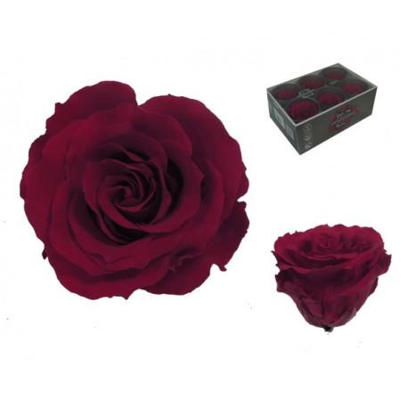 Rosa Borgoña ExtraGrande 6 uds Preservada