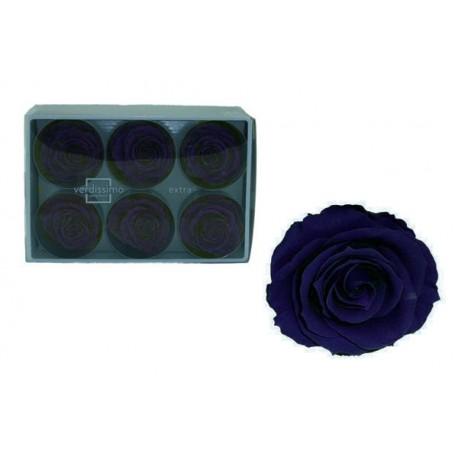 Rosa Azul oscuro ExtraGrande 6 uds Preservada