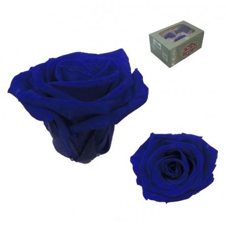 Rosa Mediana 8 uds Preservada Azul