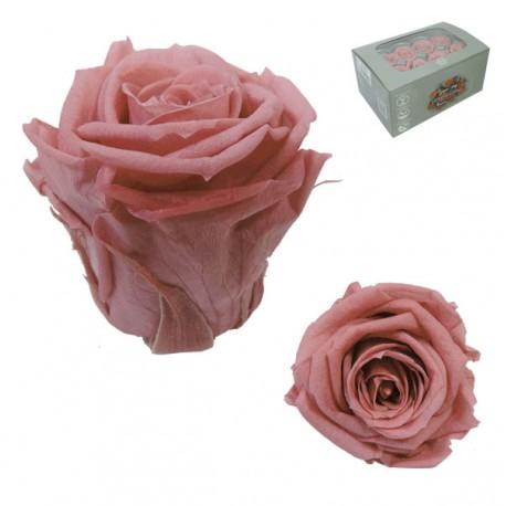 Rosa Cherry Mediana 8 uds Preservada