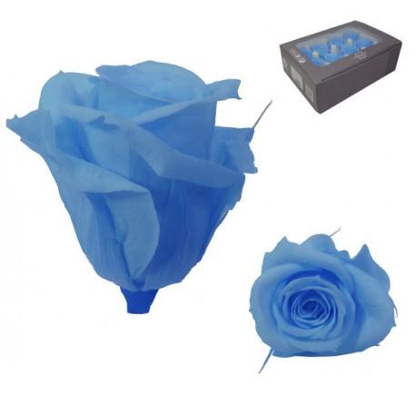 Rosa Azul cielo Mini 12 uds Preservada
