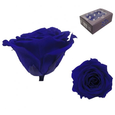 Rosa Azul oscuro Mini 12 uds Preservada