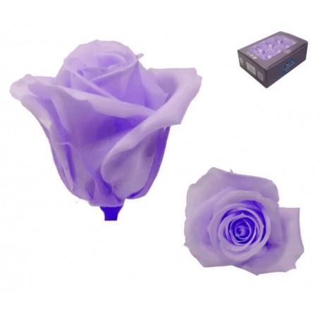 Rosa Lila Mini 12 uds Preservada