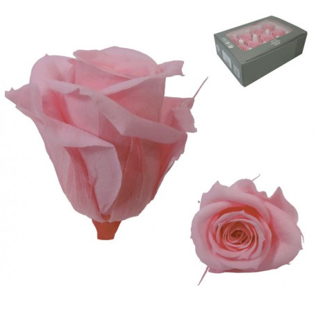 Rosa Vintage Mini 12 uds Preservada