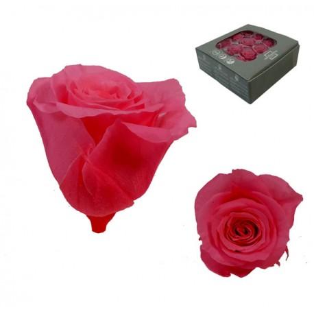 Rosa Rosa oscuro ExtraMini 16 uds Preservada