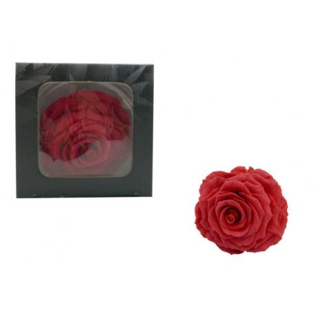 Rosa Rosa oscuro Extra Grande Preservada