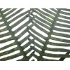 Helecho Seagull preservado ↨32x25cm (10 uds.) Verde