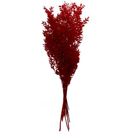 Ruscus Preservado ↨80x25x7cm Rojo