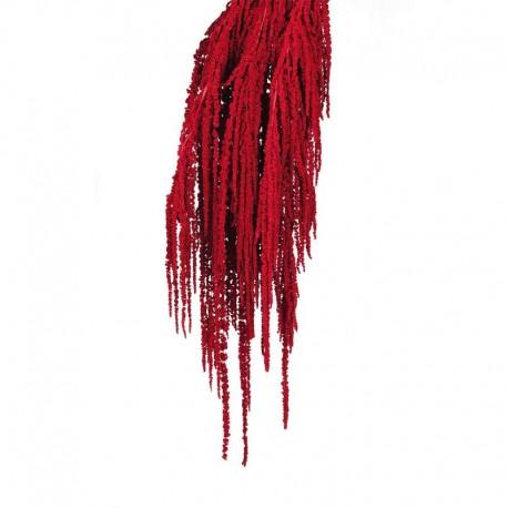 Amaranthus Caudatus Preservado