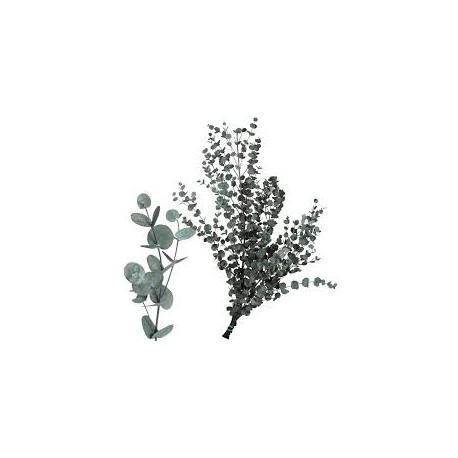 Eucaliptus Natural GUNNY VERT 200 gr Pres.