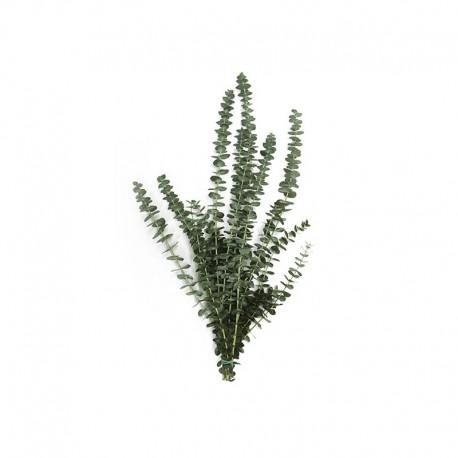 Eucaliptus Natural 200 gr Pres.