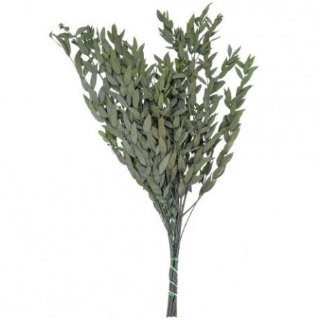 Parvifolia Preservada ↨85xØ13cm Verde